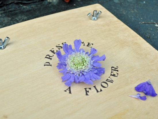 Flower-Press-DIY-Wood-Recycle-Reuse